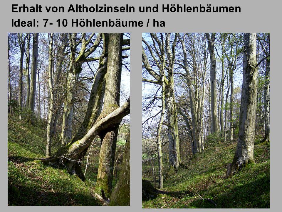 Erhalt von Altholzinseln und Höhlenbäumen Ideal: 7- 10 Höhlenbäume / ha