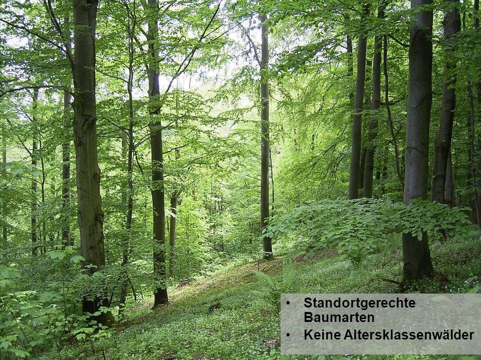 Standortgerechte Baumarten Keine Altersklassenwälder