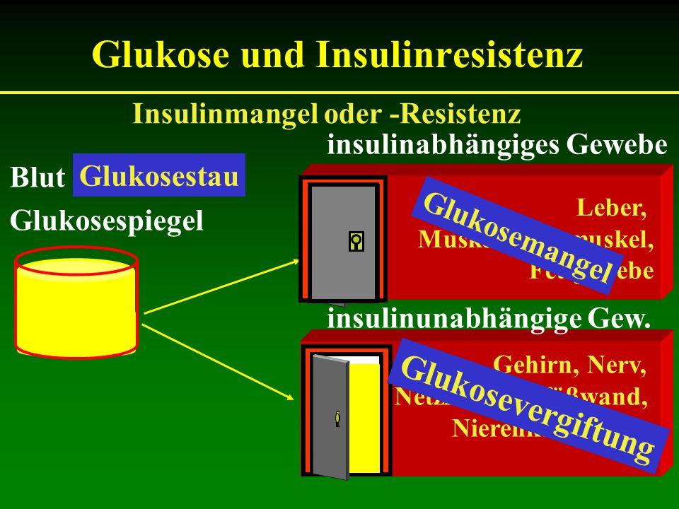 Gehirn, Nerv, Netzhaut, Gefäßwand, Nierenkörperchen Glukose und Insulinresistenz Leber, Muskel, Herzmuskel, Fettgewebe Insulinmangel oder -Resistenz B