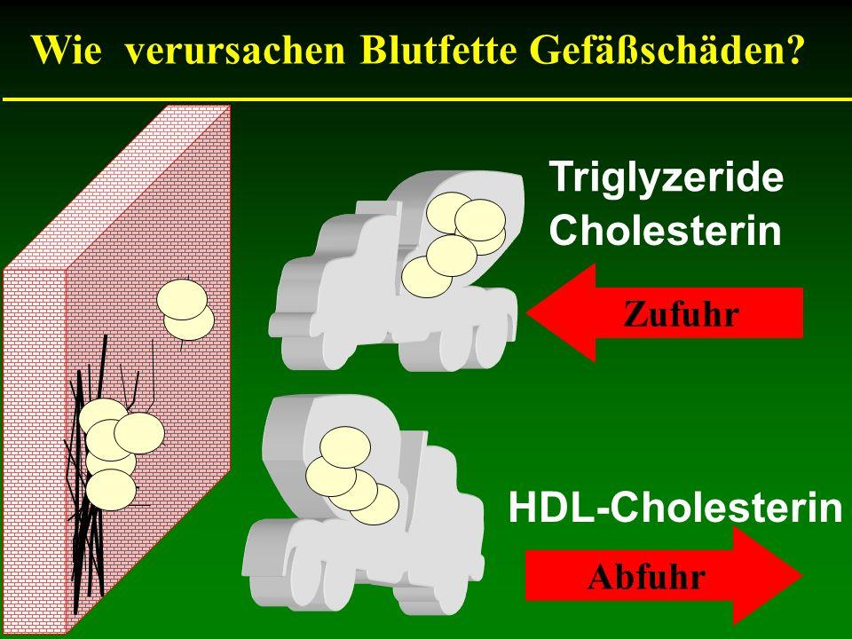 HDL-Cholesterin Wie verursachen Blutfette Gefäßschäden? Cholesterin Triglyzeride Zufuhr Abfuhr
