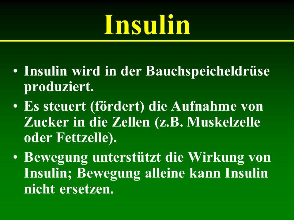 Insulin Insulin wird in der Bauchspeicheldrüse produziert. Es steuert (fördert) die Aufnahme von Zucker in die Zellen (z.B. Muskelzelle oder Fettzelle