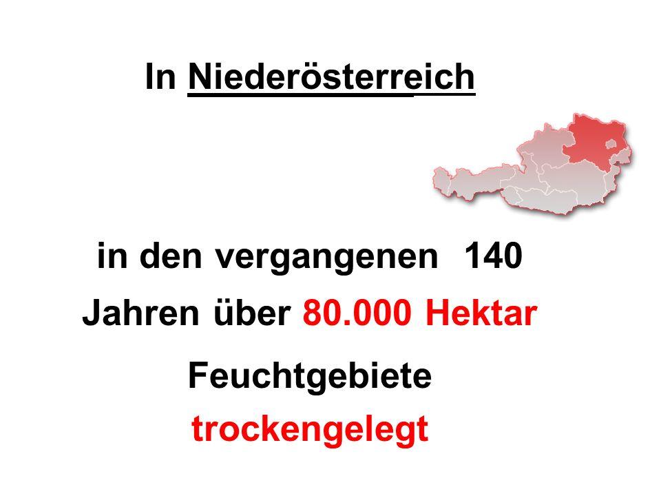 In Niederösterreich in den vergangenen 140 Jahren über 80.000 Hektar Feuchtgebiete trockengelegt
