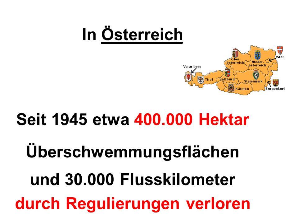 In Österreich Seit 1945 etwa 400.000 Hektar Überschwemmungsflächen und 30.000 Flusskilometer durch Regulierungen verloren