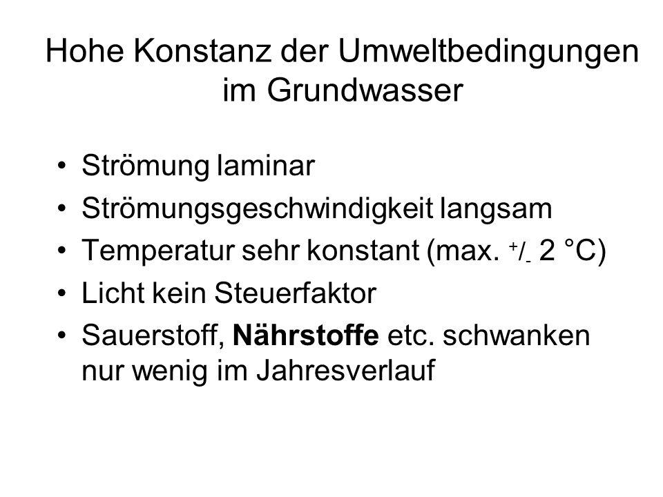 Hohe Konstanz der Umweltbedingungen im Grundwasser Strömung laminar Strömungsgeschwindigkeit langsam Temperatur sehr konstant (max. + / - 2 °C) Licht