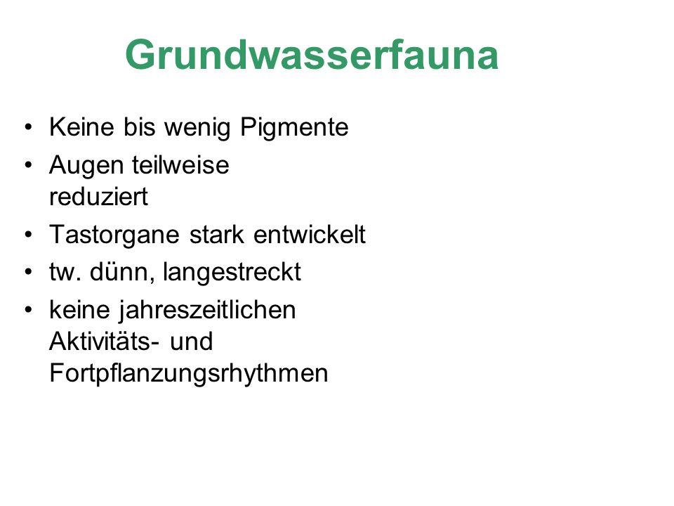 Grundwasserfauna Keine bis wenig Pigmente Augen teilweise reduziert Tastorgane stark entwickelt tw. dünn, langestreckt keine jahreszeitlichen Aktivitä