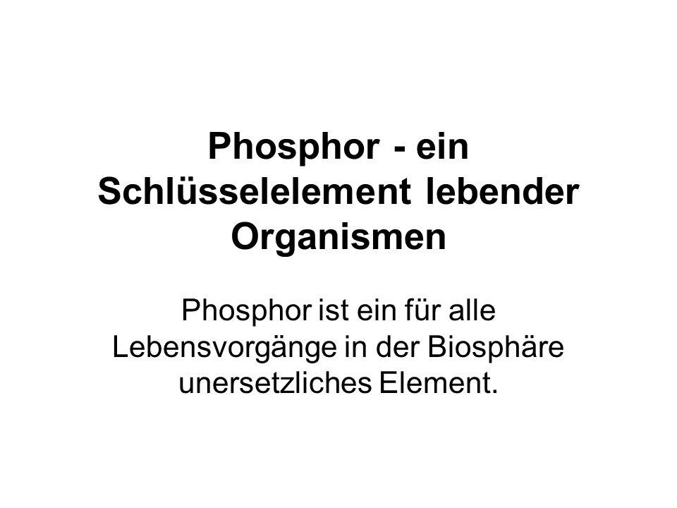 Phosphor - ein Schlüsselelement lebender Organismen Phosphor ist ein für alle Lebensvorgänge in der Biosphäre unersetzliches Element.