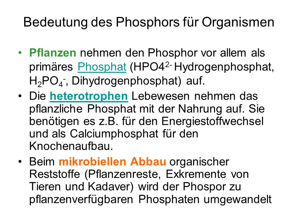 Bedeutung des Phosphors für Organismen Pflanzen nehmen den Phosphor vor allem als primäres Phosphat (HPO4 2- Hydrogenphosphat, H 2 PO 4 -, Dihydrogenp