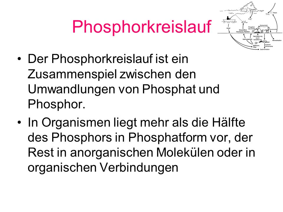 Phosphorkreislauf Phosphor wird in Form des Phosphat-Ions in den Kreislauf gebracht Pflanzen nehmen Phosphat auf, und geben Phosphor an den Boden ab, wo dieses durch Bakterien wieder zu Phosphaten umgewandelt wird.