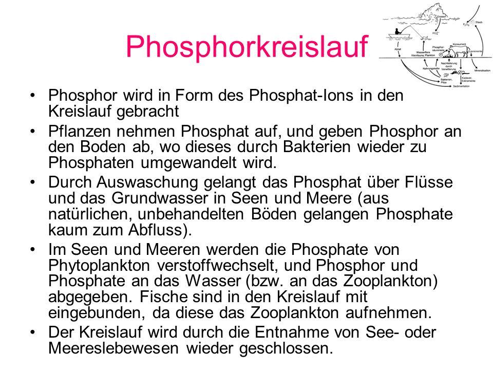 Phosphorkreislauf Phosphor wird in Form des Phosphat-Ions in den Kreislauf gebracht Pflanzen nehmen Phosphat auf, und geben Phosphor an den Boden ab,