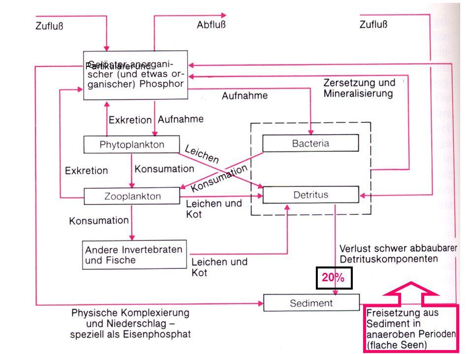 Freisetzung des P aus den See- Sedimenten Aerobe Bedingungen –Adsorption an Sedimentteilchen –Absorbtion an Eisenhydroxid Fe(OOH) + H 2 PO 4 Fe(O-HPO 4 ) + OH - ergibt: Eisen(III)Hydroxophosphat unlöslich bei aeroben Bedingungen –Rücklösung bei Sauerstoffschwund Reduktion von Eisen (III) zu Eisen (II)