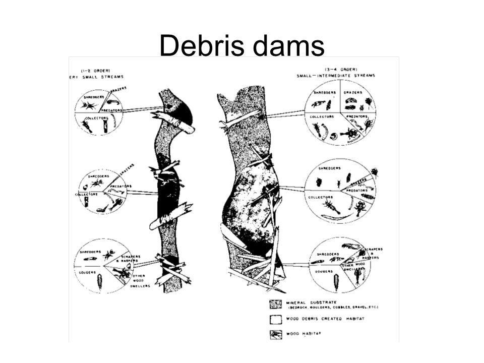 Debris dams