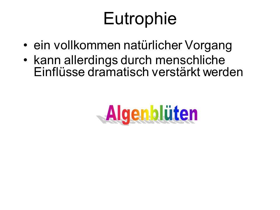 Eutrophie Die Symptome einer eutrophen Phase sind auch für den Laien leicht erkennbar.