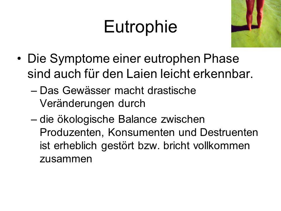 Eutrophie Die Symptome einer eutrophen Phase sind auch für den Laien leicht erkennbar. –Das Gewässer macht drastische Veränderungen durch –die ökologi