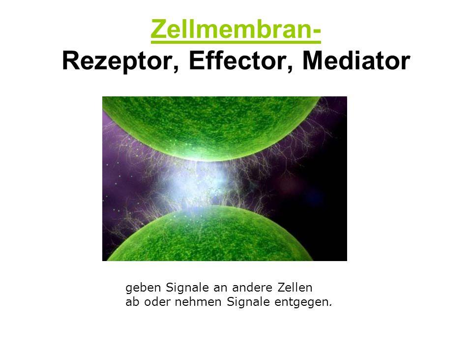 1- Die Botenstoffe Es handelt sich um Proteine, die für die Kommunikation zwischen den Zellen des Immunsystems verantwortlich sind Das « Sprachrohr » des Immunsystems Koordination der Immunreaktion