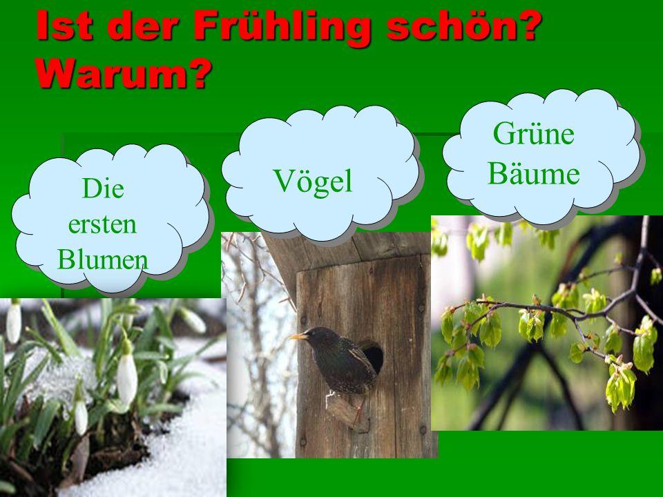 Ist der Frühling schön? Warum? Die ersten Blumen Vögel Grüne Bäume