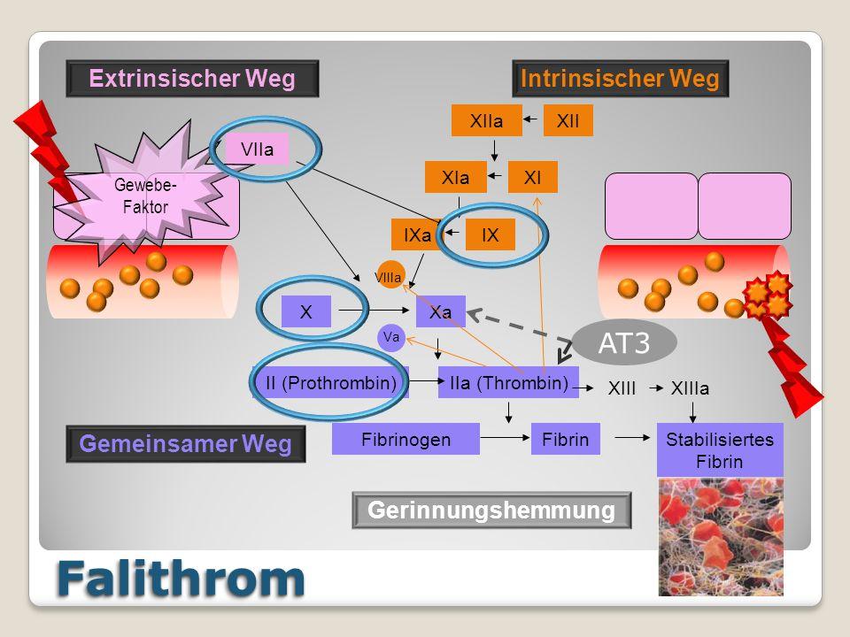FalithromFalithrom XIIXIIa XIaXI IXaIX VIIIa VIIa XXa Va II (Prothrombin)IIa (Thrombin) FibrinogenFibrinStabilisiertes Fibrin XIIIXIIIa Extrinsischer WegIntrinsischer Weg Gemeinsamer Weg Gewebe- Faktor AT3 Gerinnungshemmung