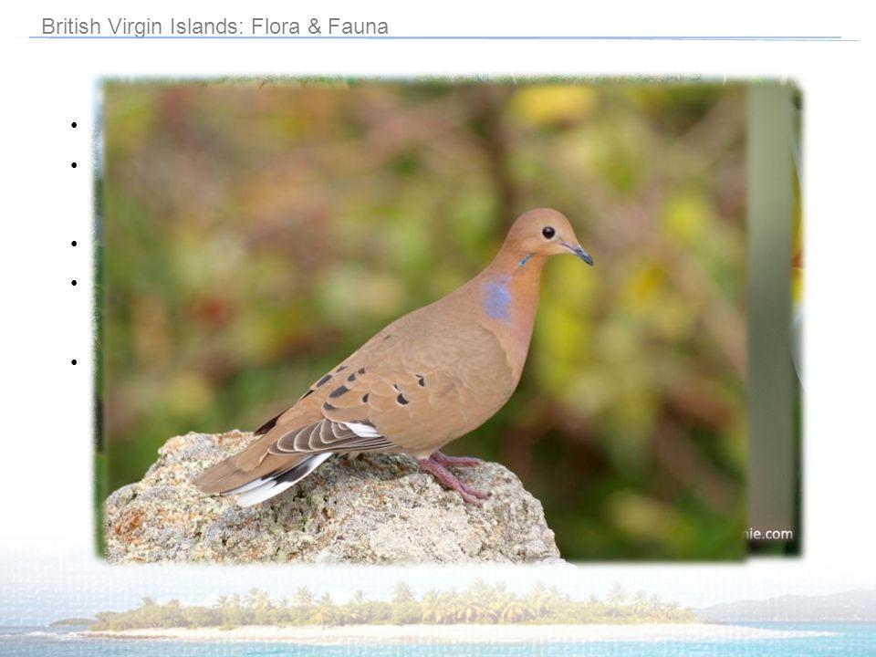 British Virgin Islands: Flora & Fauna Semi-tropische Inseln Insulanische Hügel sind von Bäumen (v.a.