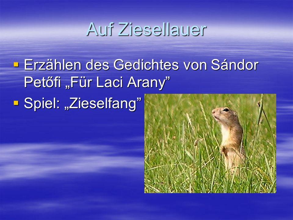 Auf Ziesellauer Erzählen des Gedichtes von Sándor Petőfi Für Laci Arany Erzählen des Gedichtes von Sándor Petőfi Für Laci Arany Spiel: Zieselfang Spiel: Zieselfang