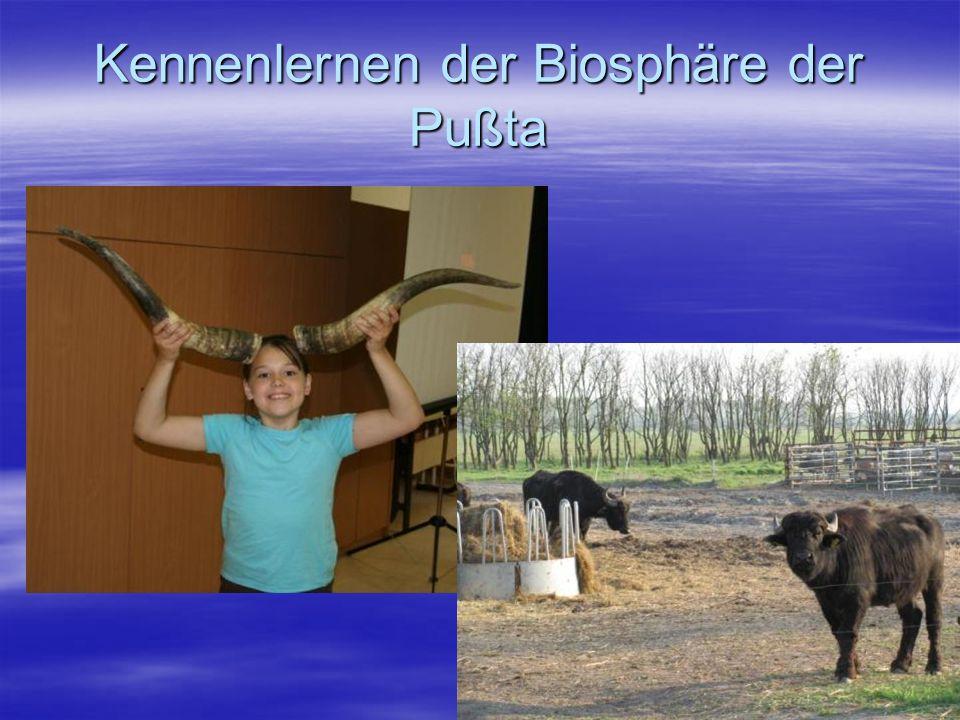 Kennenlernen der Biosphäre der Pußta