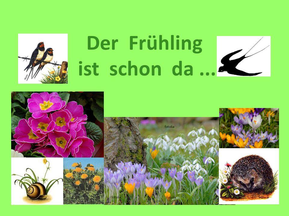 Der Frühling ist schon da...