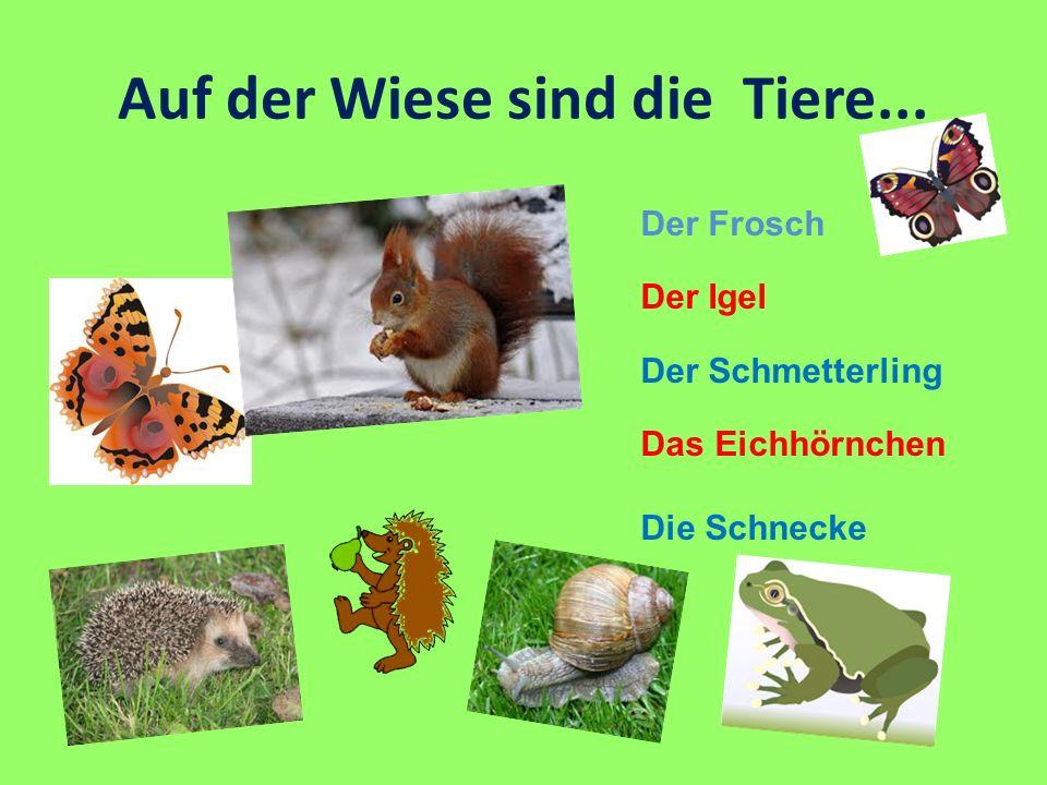 Auf der Wiese sind die Tiere... Der Frosch Der Igel Der Schmetterling Das Eichhörnchen Die Schnecke