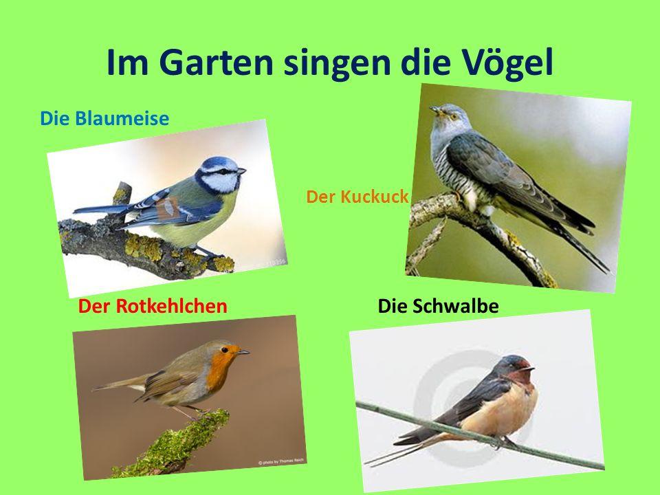 Im Garten singen die Vögel Die Blaumeise Der Kuckuck Die Schwalbe Der Rotkehlchen