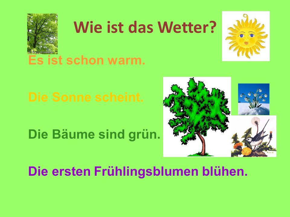 Wie ist das Wetter? Es ist schon warm. Die Sonne scheint. Die Bäume sind grün. Die ersten Frühlingsblumen blühen.