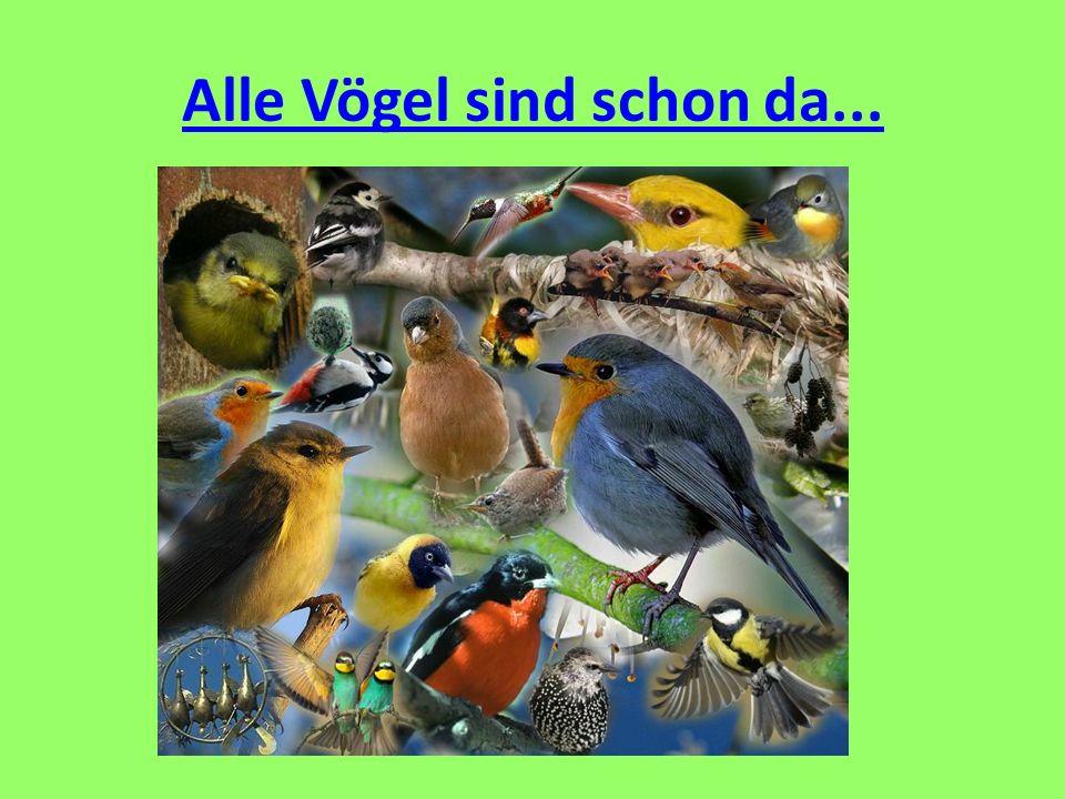 Alle Vögel sind schon da...