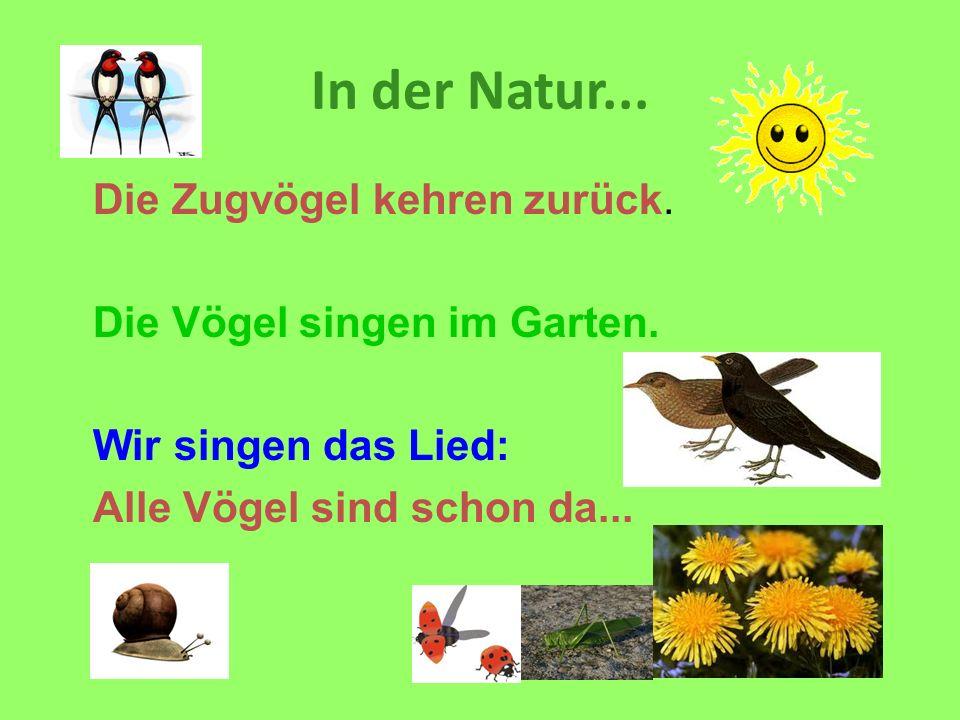In der Natur... Die Zugvögel kehren zurück. Die Vögel singen im Garten. Wir singen das Lied: Alle Vögel sind schon da...