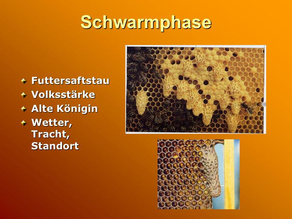 Schwarmphase FuttersaftstauVolksstärke Alte Königin Wetter, Tracht, Standort
