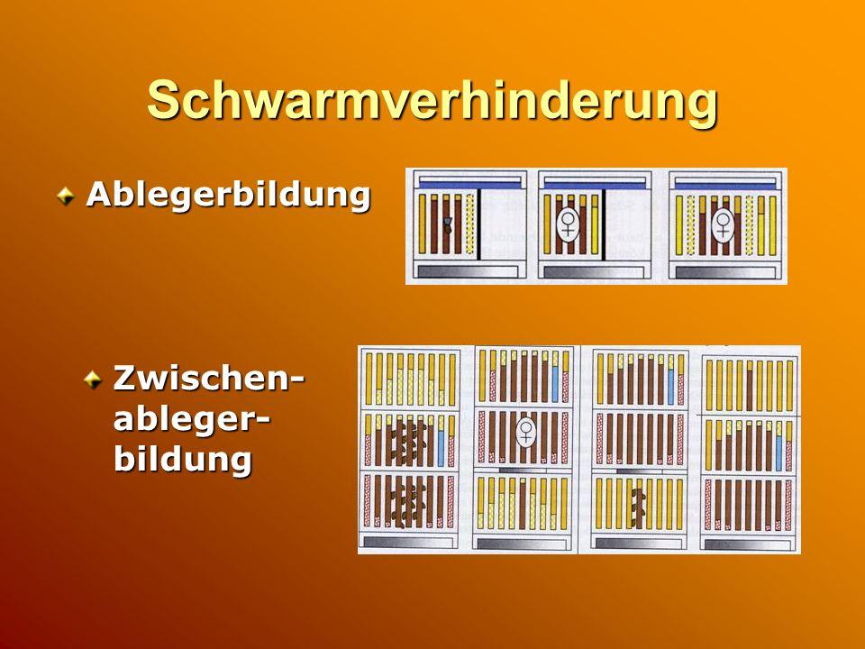 Schwarmverhinderung Ablegerbildung Zwischen- ableger- bildung