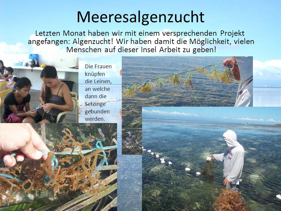Meeresalgenzucht Letzten Monat haben wir mit einem versprechenden Projekt angefangen: Algenzucht.