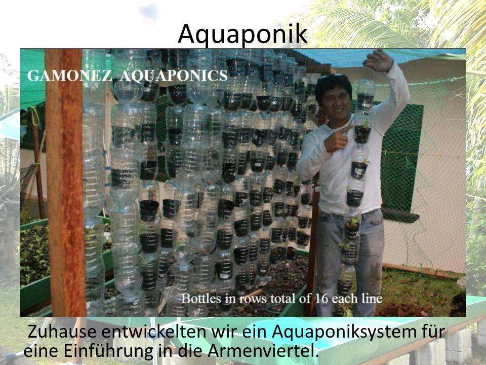 Aquaponik Zuhause entwickelten wir ein Aquaponiksystem für eine Einführung in die Armenviertel.