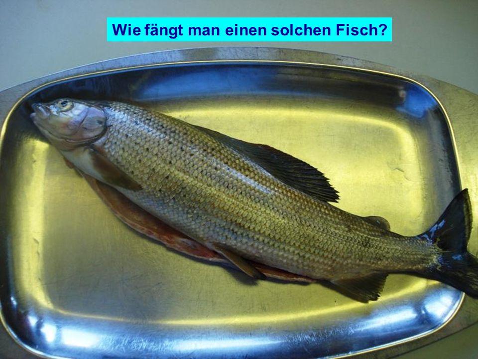 Wie fängt man einen solchen Fisch?
