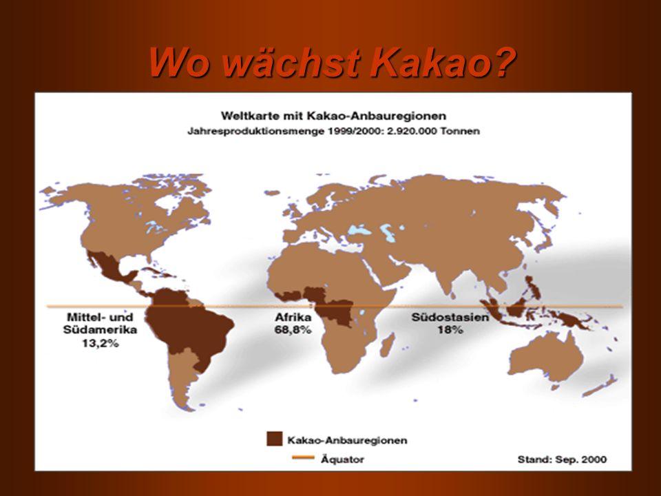 Wo wächst Kakao?