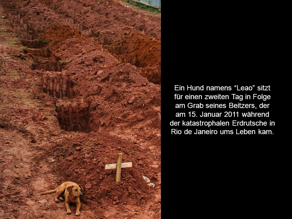 Ein Hund namens Leao sitzt für einen zweiten Tag in Folge am Grab seines Beitzers, der am 15.