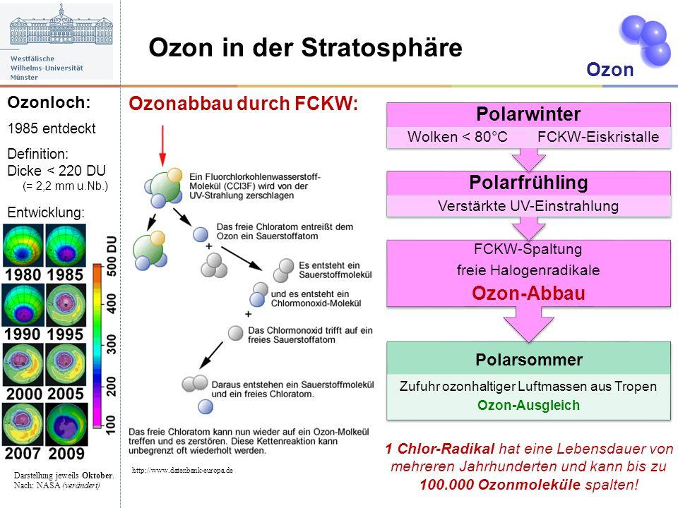 Ozon in der Stratosphäre Ozonabbau durch FCKW: Ozon http://www.datenbank-europa.de Polarsommer Zufuhr ozonhaltiger Luftmassen aus Tropen Ozon-Ausgleic