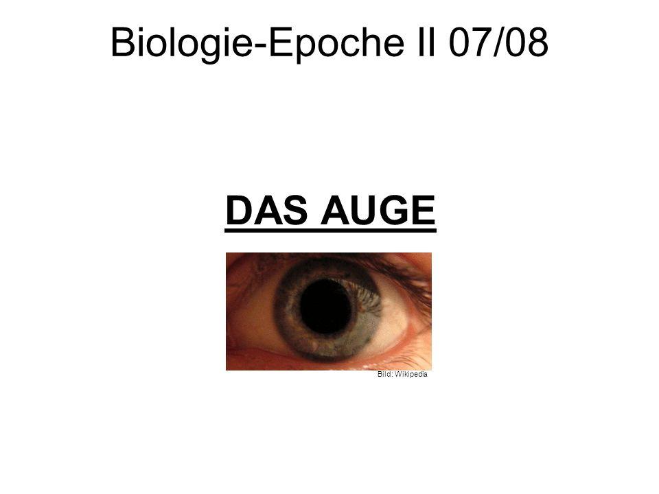 3 Das Auge 3.3 Funktion – Versuche zur Bildentstehung I Versuch I Wir schauten für ca.