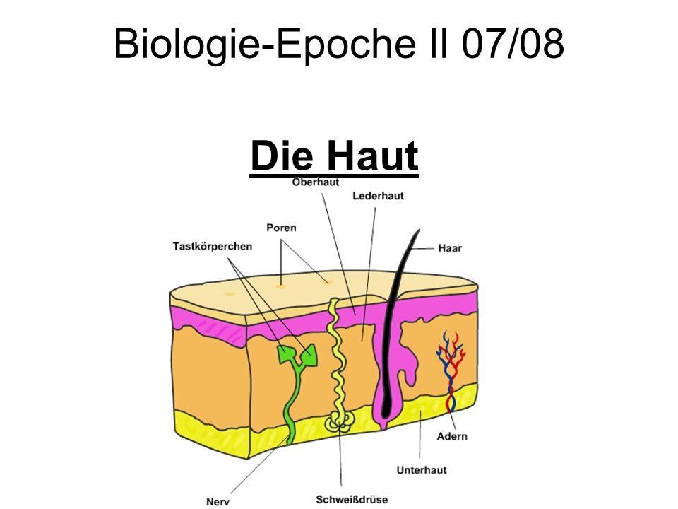 Die Haut Biologie-Epoche II 07/08