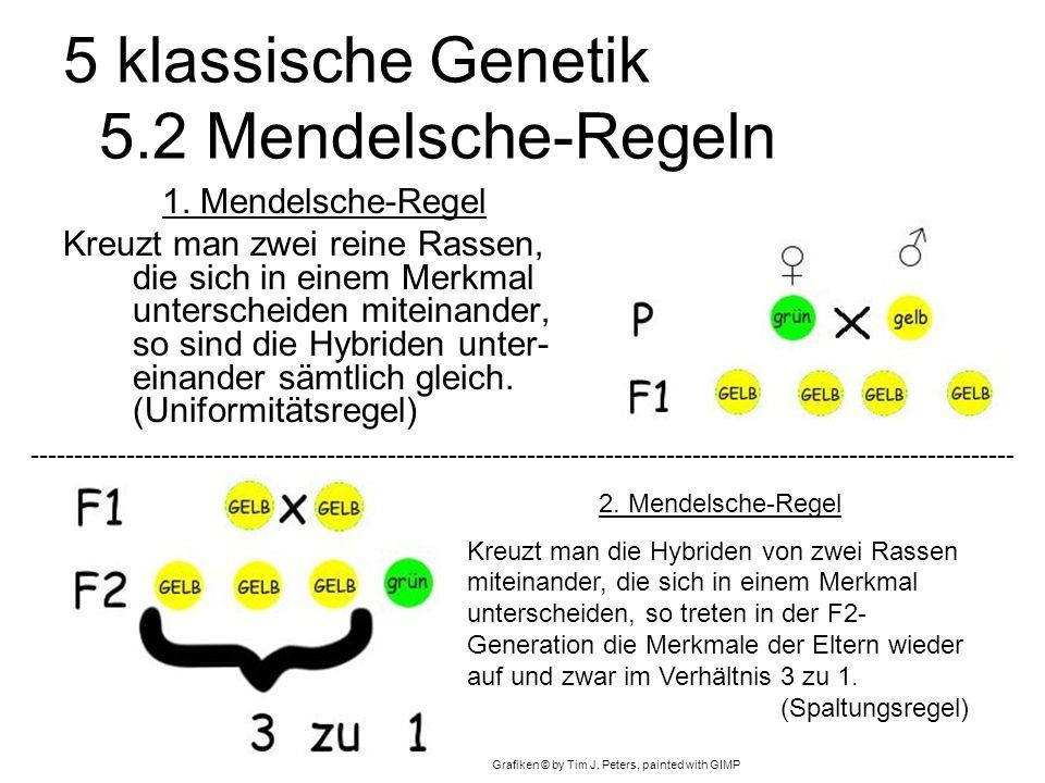 5 klassische Genetik 5.2 Mendelsche-Regeln 1.