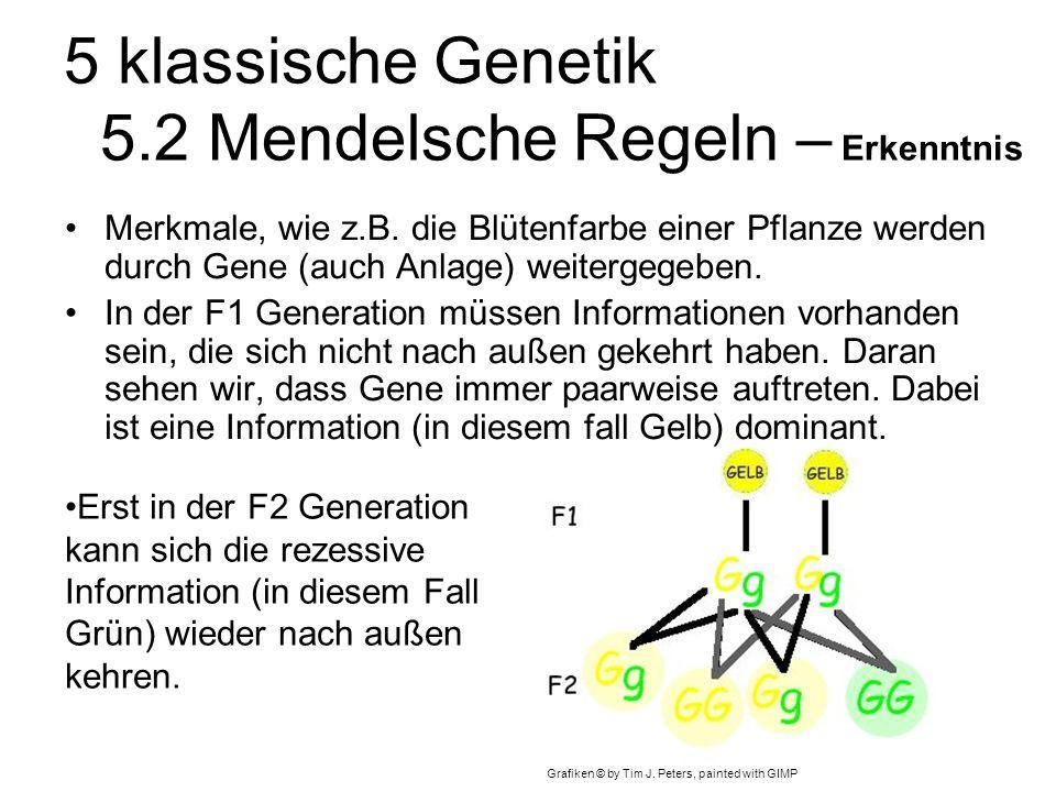 5 klassische Genetik 5.2 Mendelsche Regeln – Erkenntnis Merkmale, wie z.B.