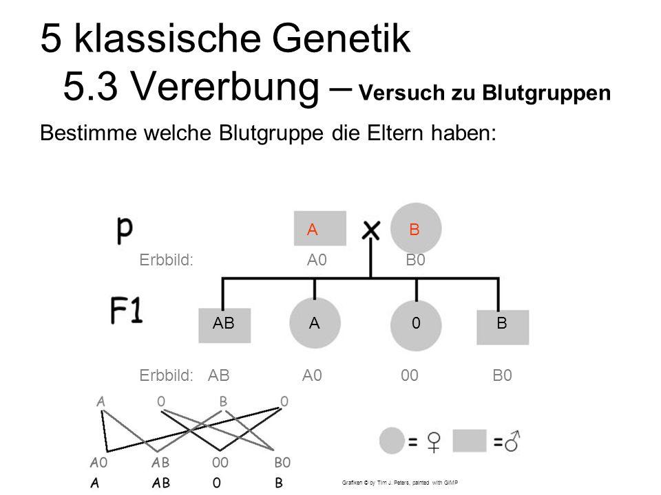 5 klassische Genetik 5.3 Vererbung – Versuch zu Blutgruppen Bestimme welche Blutgruppe die Eltern haben: ABA0B Erbbild: AB A0 00 B0 A B Erbbild: A0 B0 Lösung bei klick.