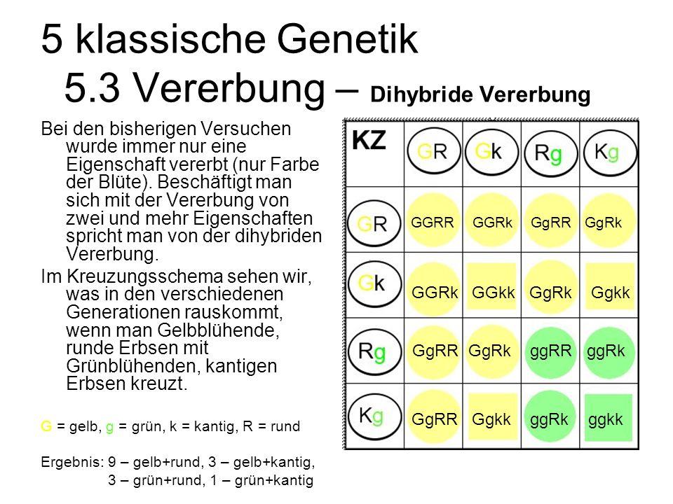5 klassische Genetik 5.3 Vererbung – Dihybride Vererbung Bei den bisherigen Versuchen wurde immer nur eine Eigenschaft vererbt (nur Farbe der Blüte).
