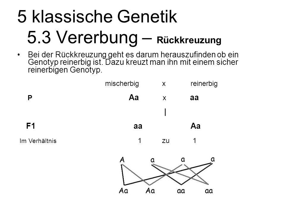 5 klassische Genetik 5.3 Vererbung – Rückkreuzung Bei der Rückkreuzung geht es darum herauszufinden ob ein Genotyp reinerbig ist.
