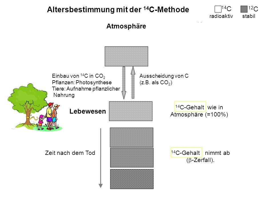 Bildung von 14 C -Zerfall von 14 C Altersbestimmung mit der 14 C-Methode kosmische Höhenstrahlung Zeit nach dem Tod 14 C-Gehalt nimmt ab ( -Zerfall).
