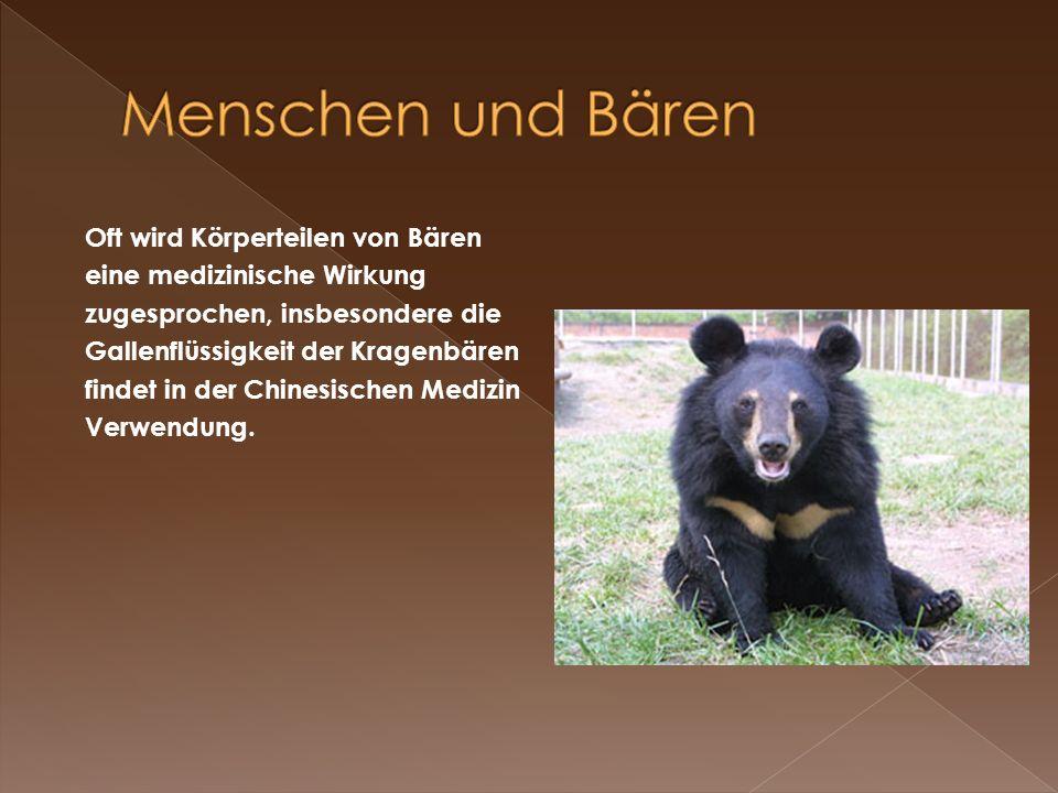 Oft wird Körperteilen von Bären eine medizinische Wirkung zugesprochen, insbesondere die Gallenflüssigkeit der Kragenbären findet in der Chinesischen
