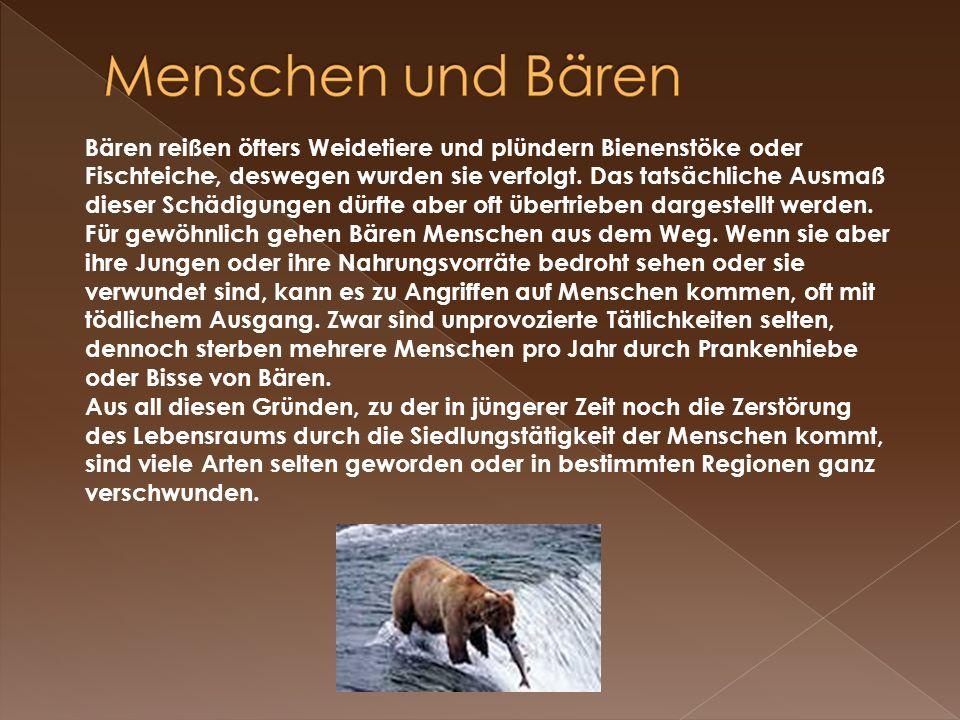 . Bären reißen öfters Weidetiere und plündern Bienenstöke oder Fischteiche, deswegen wurden sie verfolgt. Das tatsächliche Ausmaß dieser Schädigungen