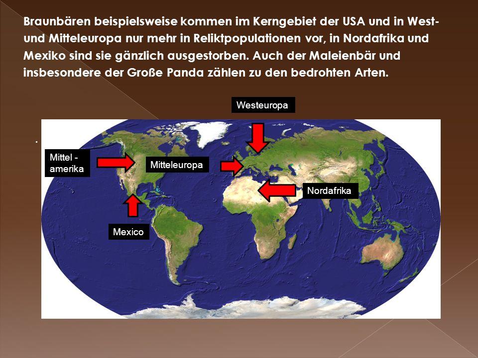 Braunbären beispielsweise kommen im Kerngebiet der USA und in West- und Mitteleuropa nur mehr in Reliktpopulationen vor, in Nordafrika und Mexiko sind