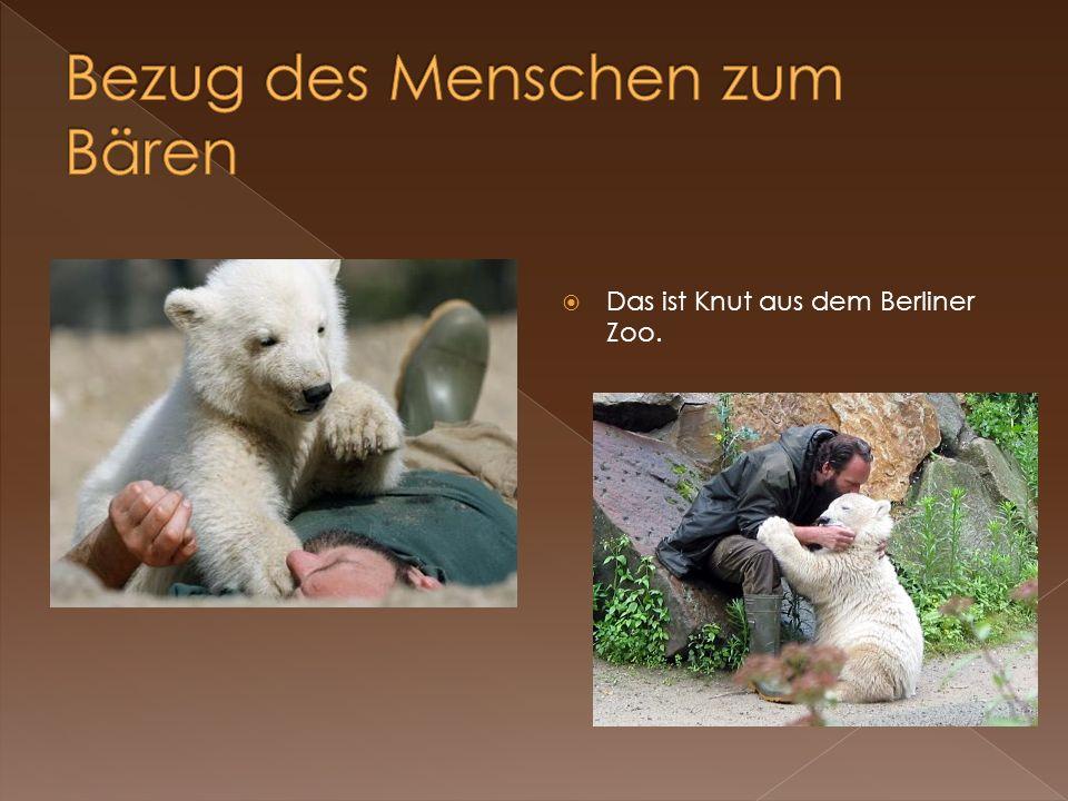 Das ist Knut aus dem Berliner Zoo.