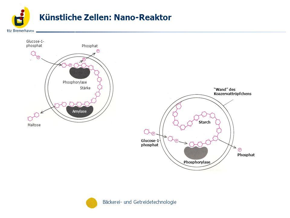 Bäckerei- und Getreidetechnologie Künstliche Zellen: Nano-Reaktor Amylase Phosphorylase Maltose Phosphat Stärke Glucose-1- phosphat Phosphat Phosphory